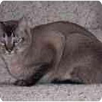 Adopt A Pet :: ET & Sassy - Simms, TX