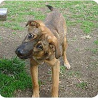 Adopt A Pet :: Captain - Antioch, IL