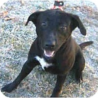Adopt A Pet :: Skipper - Foster Needed - kennebunkport, ME