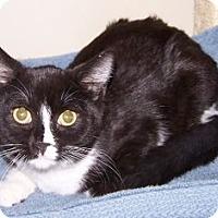Adopt A Pet :: K-DelMar4-Toucan - Colorado Springs, CO