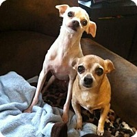 Adopt A Pet :: Brad and Angelina - Yelm, WA