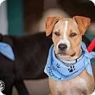 Adopt A Pet :: VCU RAMS