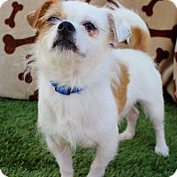 Adopt A Pet :: Patch - Inglewood, CA
