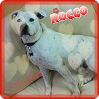 Adopt A Pet :: Rocco - Chester, IL