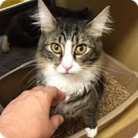 Adopt A Pet :: Fluffy - Atlanta, GA