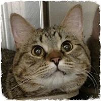 Adopt A Pet :: Sydney - Pueblo West, CO