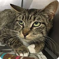 Adopt A Pet :: Handsome - PetSmart - Voorhees, NJ
