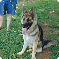 Adopt A Pet :: Rush - Nashua, NH