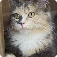 Adopt A Pet :: Josephine - Siren, WI