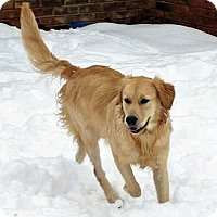 Adopt A Pet :: Bama III - BIRMINGHAM, AL