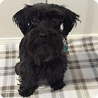 Adopt A Pet :: Pokey - Redondo Beach, CA