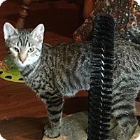 Adopt A Pet :: Bay - St. Paul, MN