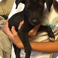 Adopt A Pet :: Jack and Jake - Brooksville, FL