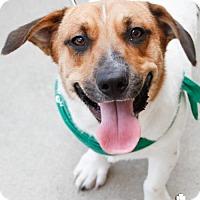 Adopt A Pet :: Tiny - Washington, DC