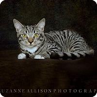 Adopt A Pet :: Titan - Van Nuys, CA