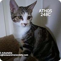 Adopt A Pet :: Athos - Spring, TX