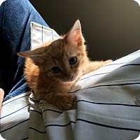 Adopt A Pet :: Trix - Spring, TX