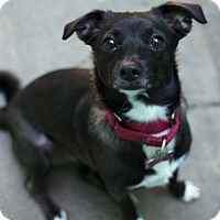 Adopt A Pet :: Maggie - Los Angeles, CA