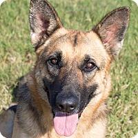 Adopt A Pet :: Annabella - Walnut Creek, CA