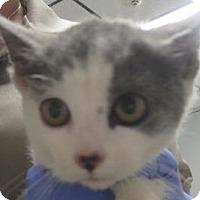 Adopt A Pet :: Oleg, Anastasia, Igor  $20 - Lincolnton, NC