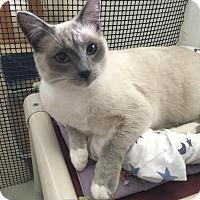 Adopt A Pet :: Heidi - Elk Grove, CA