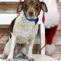Adopt A Pet :: Nate - Waldorf, MD