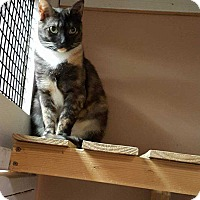 Adopt A Pet :: Tori - Acworth, GA