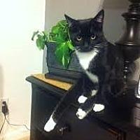 Adopt A Pet :: Brenn - Mobile, AL