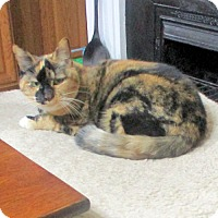 Adopt A Pet :: Blossom - Rocky Hill, CT