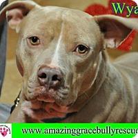Adopt A Pet :: Wyatt - Pensacola, FL