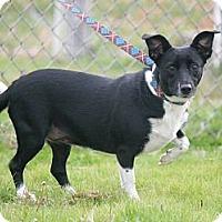 Adopt A Pet :: Stella - Henderson, KY