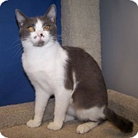 Adopt A Pet :: Victoria - Colorado Springs, CO