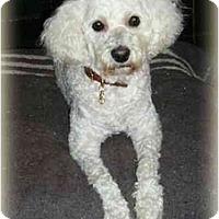 Adopt A Pet :: Rocco - Rigaud, QC