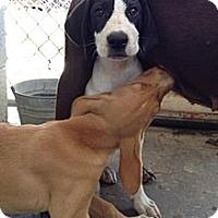 Adopt A Pet :: Carla - Richmond, VA