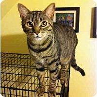 Adopt A Pet :: Tink - Farmingdale, NY