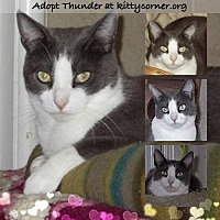 Adopt A Pet :: Thunder - Liverpool, NY