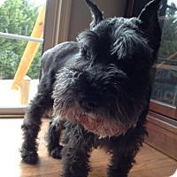 Adopt A Pet :: Mickey-News! - Laurel, MD