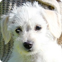 Adopt A Pet :: Mandy - La Costa, CA