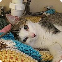 Adopt A Pet :: Adora - Tampa, FL