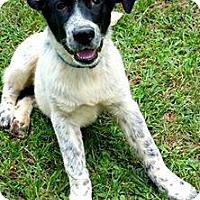 Adopt A Pet :: Leo meet me 10/3 - Manchester, CT
