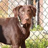 Adopt A Pet :: Tom - Charleston, SC