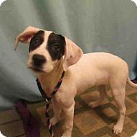 Adopt A Pet :: *PORSHA - Upper Marlboro, MD