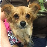 Adopt A Pet :: Jessi - Bellingham, WA