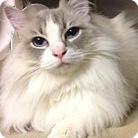 Adopt A Pet :: Joey (Manhattan) - New York, NY