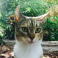 Adopt A Pet :: Spunky - Bonita Springs, FL