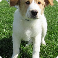 Adopt A Pet :: Fozzy - New Oxford, PA