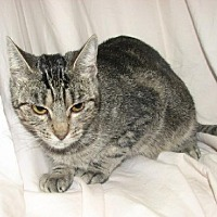 Adopt A Pet :: Elvira - Fort Walton Beach, FL