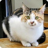 Adopt A Pet :: Scarlett 2016 - Alexandria, VA