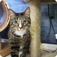 Adopt A Pet :: LOUIE - Toledo, OH