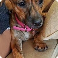 Adopt A Pet :: Bunnie - Richmond, VA